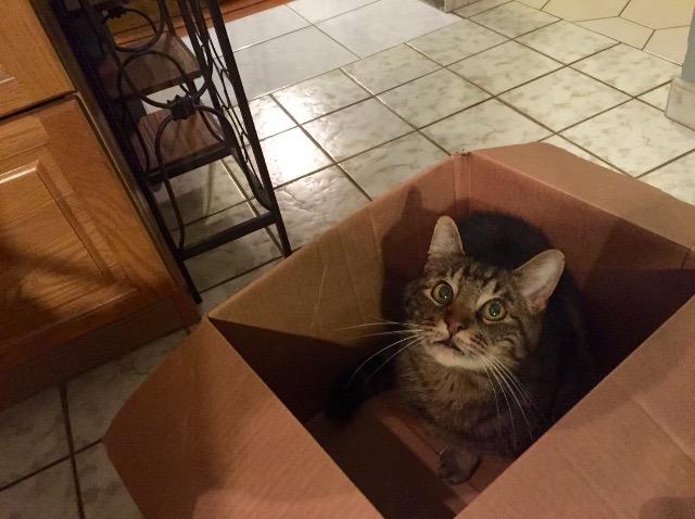 My cat Phoenix in a box-Photo by Ashley Sarazin