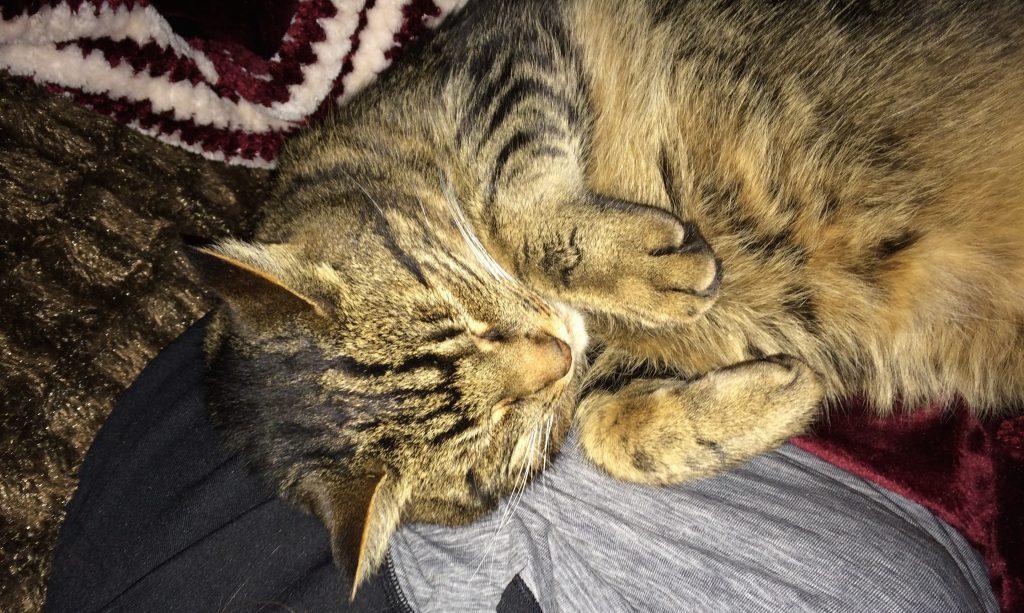 Sleeping beauty - photo by Ashley Sarazin